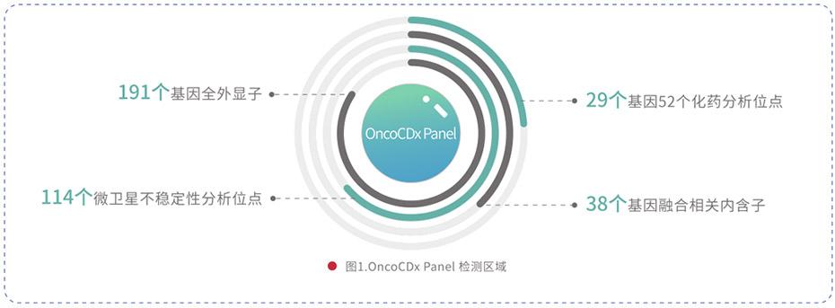 191基因突变检测产品(OncoCDx/TMB)
