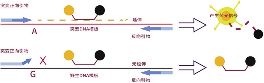 人CALR基因突变检测试剂盒