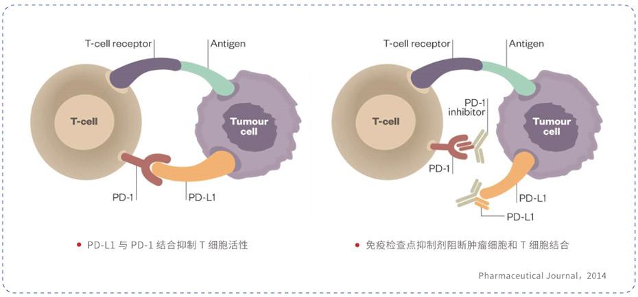 PD-L1抗体检测试剂(迈普康)