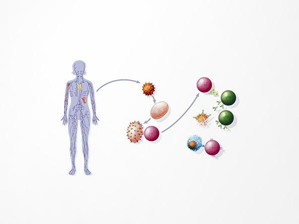 淋巴瘤188基因突变检测产品