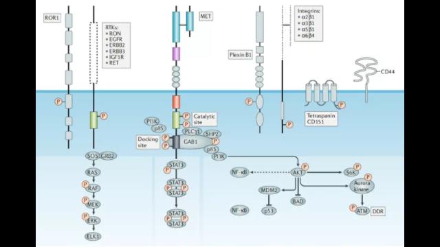 迈杰转化医学MSI检测和c-MET外显子14跳读突变检测产品获欧盟CE认证